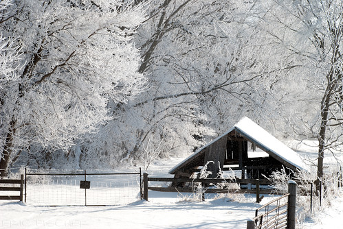 winter white snow cold tree ice fog fence landscape frozen frost hoarfrost country icy frozenfog kalona