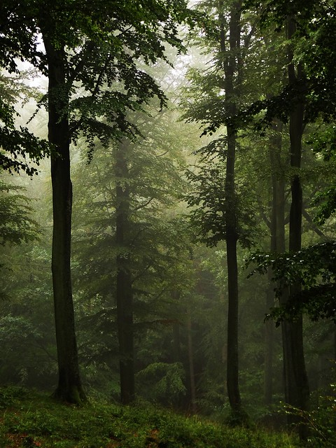 High Forest... in the rain