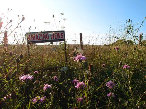 copyright field sign rural virginia country wildflowers allrightsreserved amazingviews olympusxz1 ©daveelmore