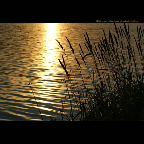 park sunset summer sun nature water grass silhouette backlight square golden evening pond surface shore schaumburg ripples tones bulrush thegalaxy bussewoodsforestpreserve