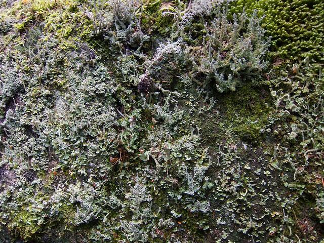 2:41:13 (76%): vermont hiking greenmountains mthunger whiterocktrail mtwhiterock