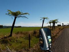wo, 26/01/2011 - 22:45 - 019. Van Noord tot zuid, deze Fern Tree is overal