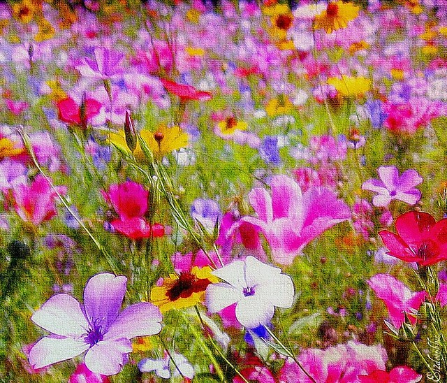 The Colours Of  Summer