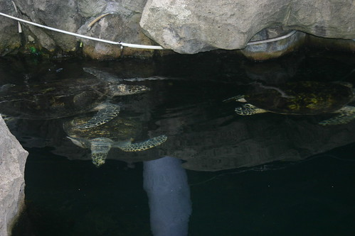 Turtles | by jofo2005