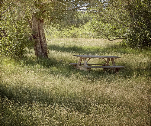 tree canon table colorado shade grasses hdr picnictable underthetrees t1i dogwalkpark