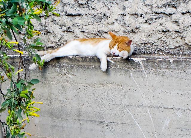 Greek nap