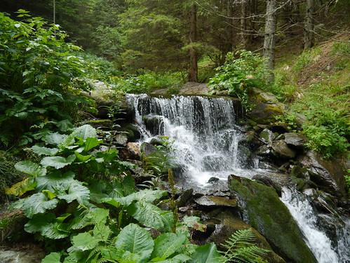 alps creek forest austria österreich rocks whitewater bach alpen wald niederösterreich autriche felsen loweraustria wildwasser mariensee hochwechsel themenweg themetrail wechselgraben