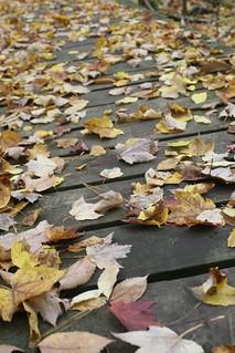 Leaves on bridge | by Virtual EyeSee