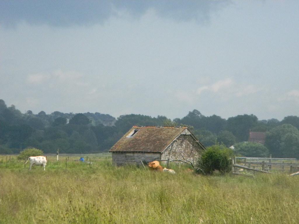 Barn and cows Amberley Wild Brooks, Pulborough Circular