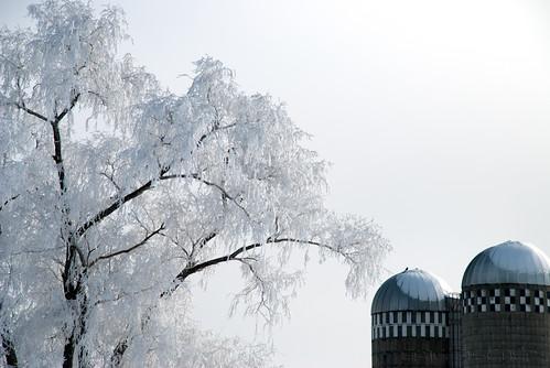 winter white snow cold tree ice fog landscape frozen frost hoarfrost farm country silo icy frozenfog kalona