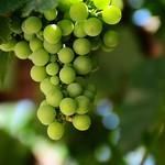 grapes 葡萄