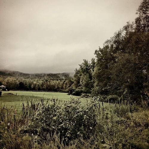 camera trees mist field rain sepia clouds edited iphone