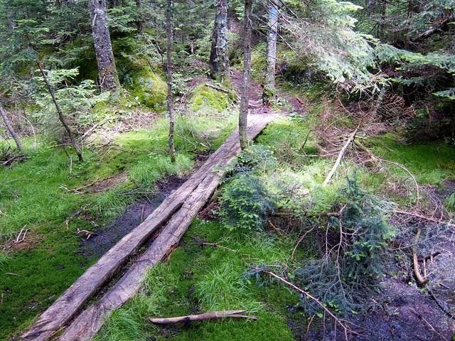 2:39:05 (75%): vermont hiking greenmountains mthunger whiterocktrail mtwhiterock