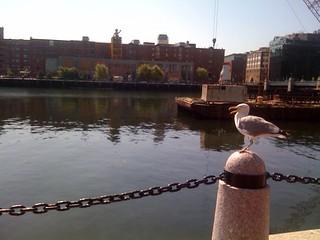 Boston - Seagull