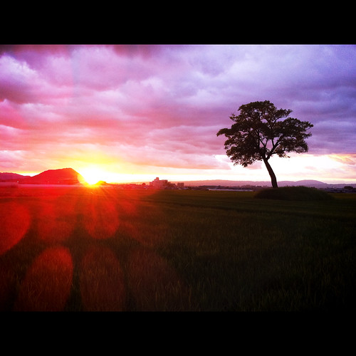 sunset orange apple silhouette snap 夕景 asuka asukavillage asukamura 明日香村 iphone4 yourfavorite201116