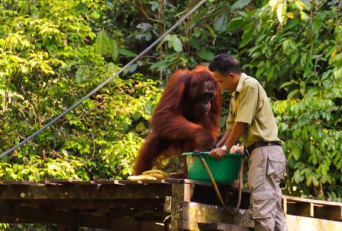 Semenggoh Wildlife Rehabilitation Centre | by PhotosShoot