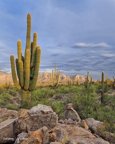 arizona cactus mountains desert tucson saguaro sonorandesert santacatalina orovalley puschridge