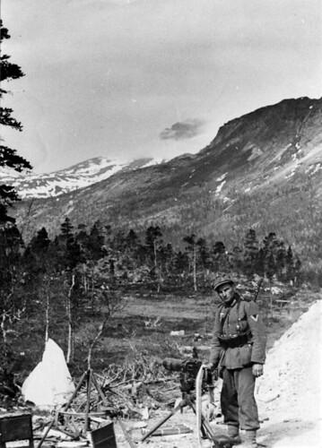 Bergjeger i nærheten av Viskiskoia, Saltdal