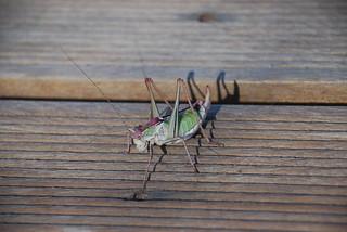 local bug life, Dionysos May 2008 | by alljengi