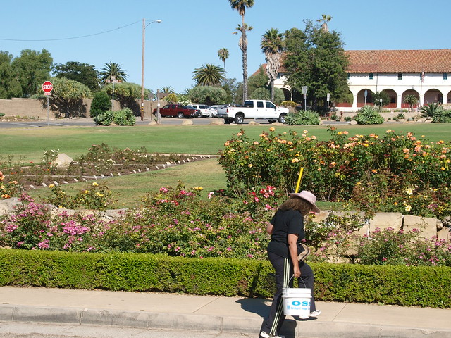 K8021445 Cezanne off to volunteer work at Postel rose garden