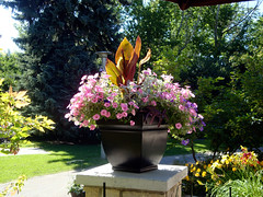 Canna Container
