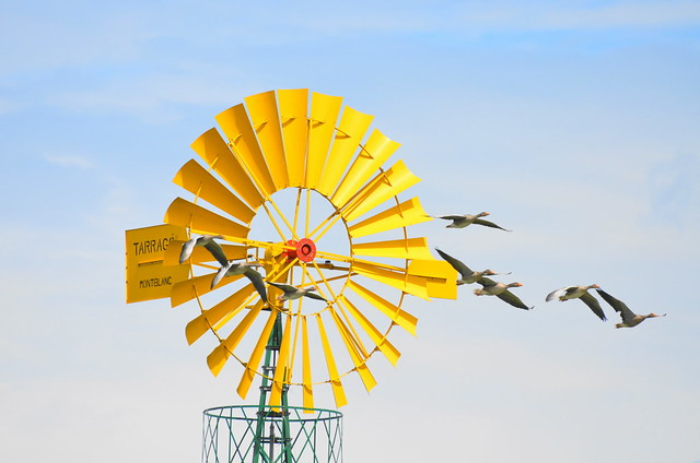 Windkraft  - wind power