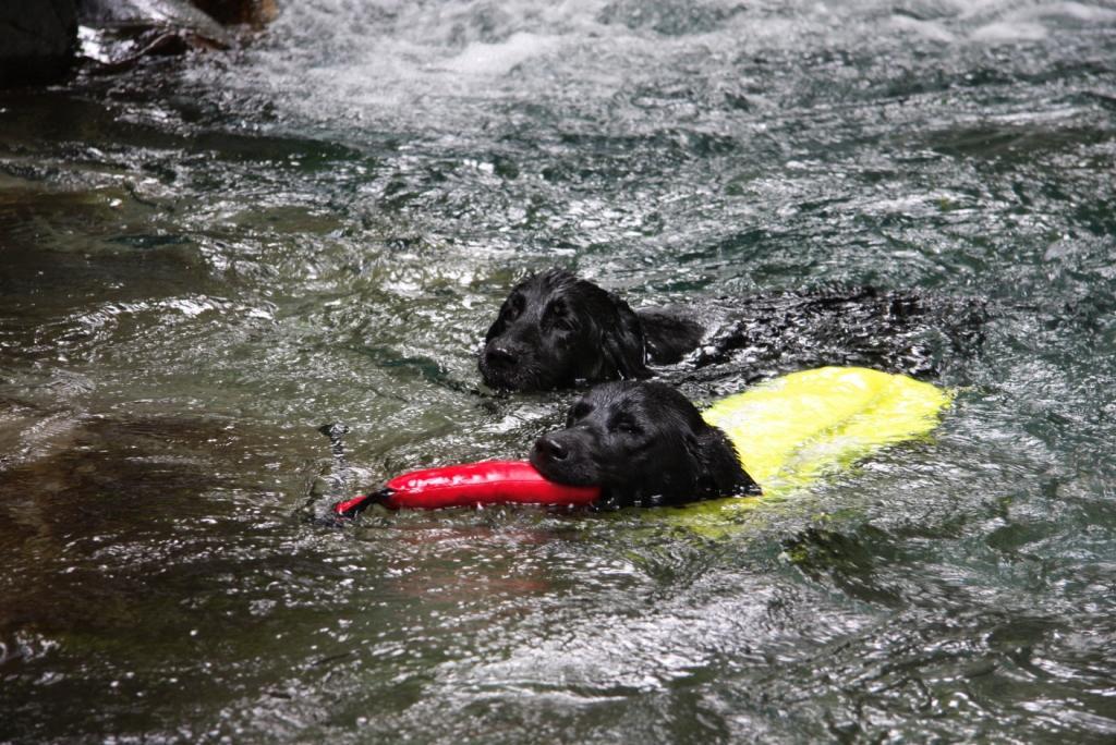 滝で泳ぐウインとくらら   flat kurara   Flickr