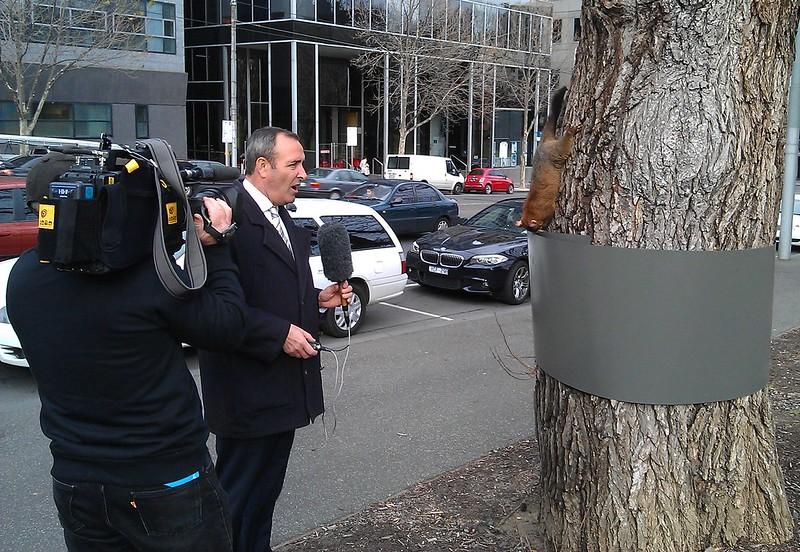 Brendan Donohoe from Channel 7 interviews a possum in the Flagstaff Gardens (1/2)