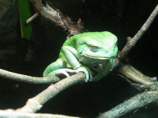 Perching Frog