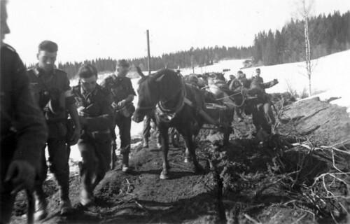 Norske hester rekvirert av bergjegere