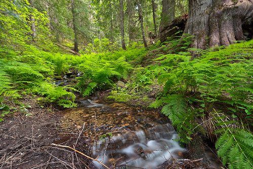 water forest idaho stjoenationalforest hobocedargrove idahopanhandlenationalforests