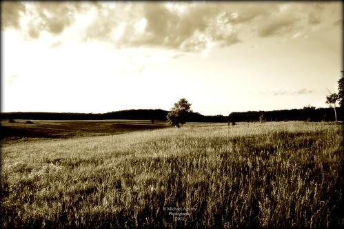 sunset tree prairie