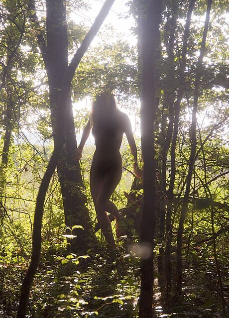 Wood nymph returns home at dawn