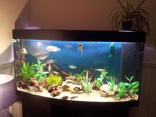 My aquarium | by (: Rebecca-louise :)