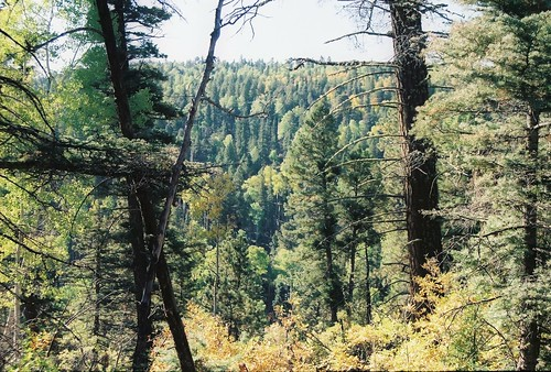 newmexico carsonnationalforest