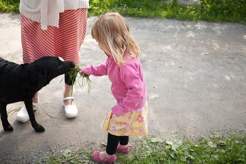 Gräsätande hundar | by Jeroen_Wolfers