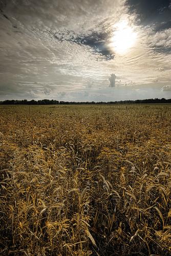 park sunset ohio field ian springfield bog holmes akron akronohio