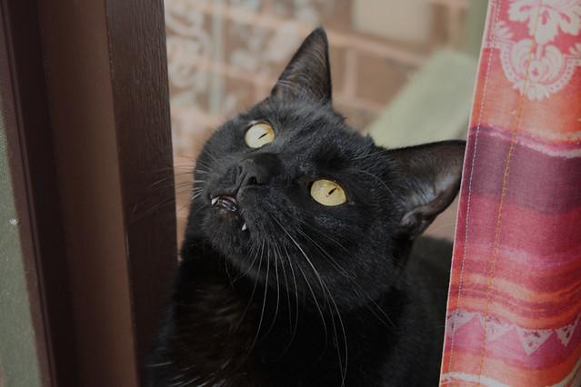 Blacky Sylvester!!
