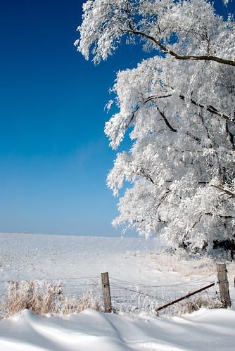 blue winter white snow cold tree ice fog fence landscape frozen frost hoarfrost country icy drift frozenfog kalona