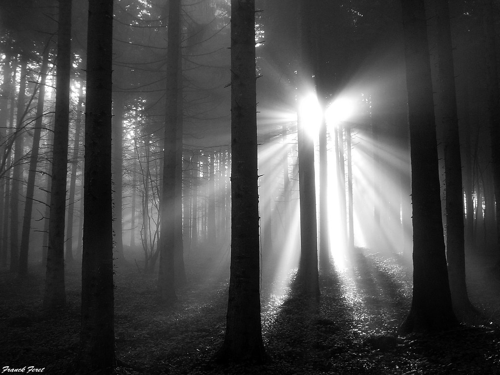 Lumière Dans La Foret De Myon Variation Noir Et Blanc High