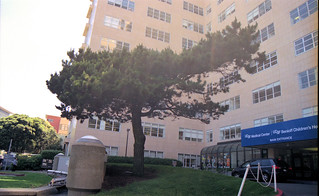 UCSF lone pine | by THE Holy Hand Grenade!