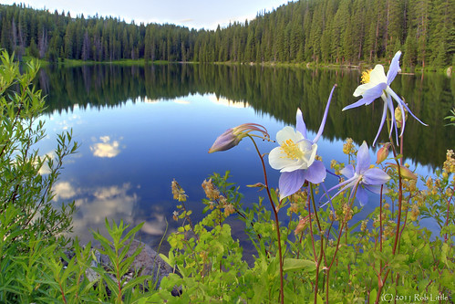 trees sky lake mountains water reflections landscape colorado rocky grand reservoir wildflowers mesa columbines