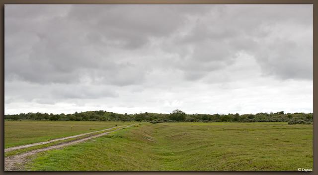 Vogelenveld De Zilk AWD-6516