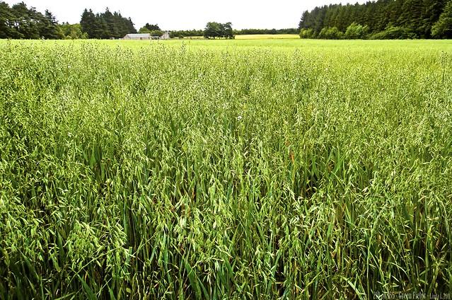 210 of 365 - Green Field