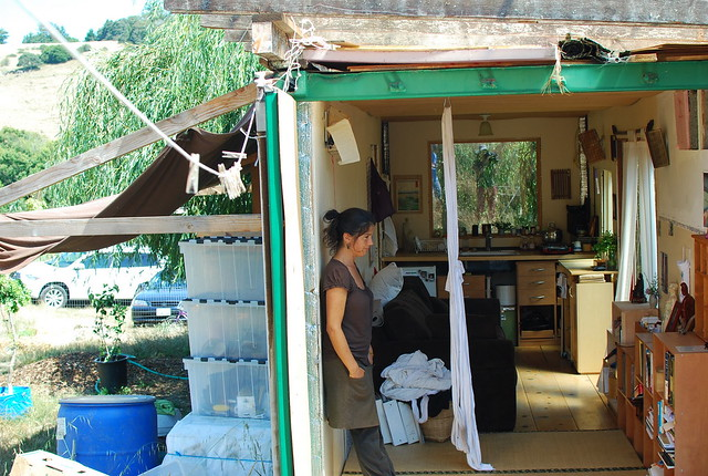 lulu, on her shipping container tiny house