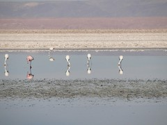 za, 14/11/2009 - 13:15 - 41_ het zoutmeer_ Salar de Atacama