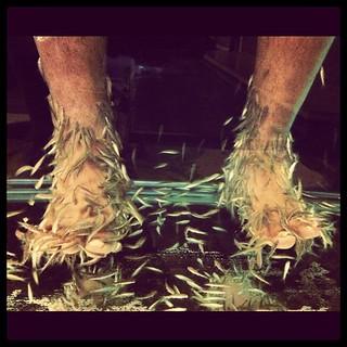gora #fish #pedicure #patong #Thailand | bev pereira | Flickr