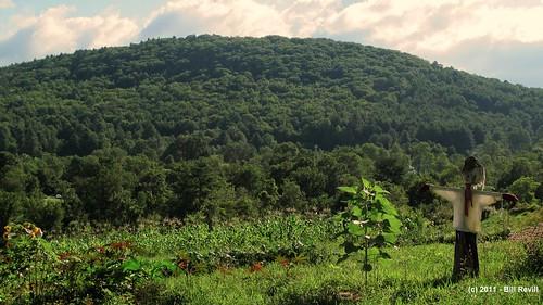 summer green rural vermont scarecrow chester vt