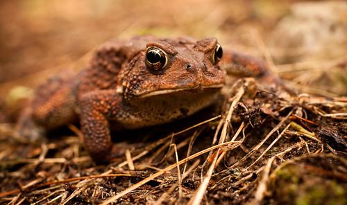virginia toad campout bergton highlandretreat mtclintonmennonitechurch