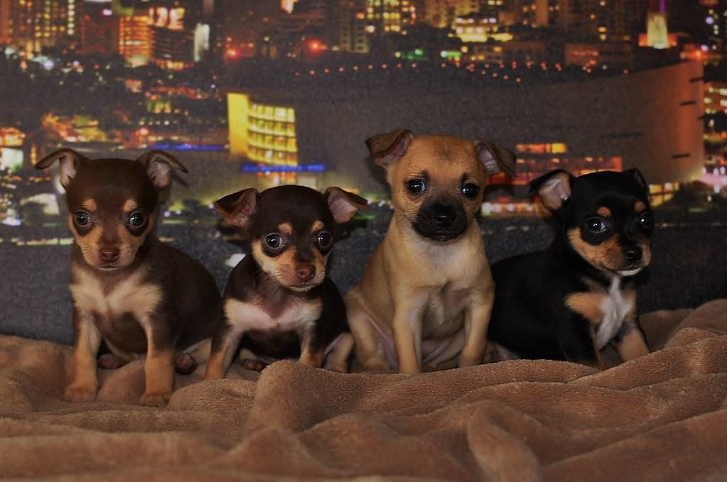 Miami Puppy Cam Family PIC 7-16-2011